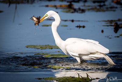 16/52-3: Egret