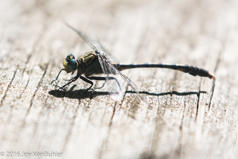 25/52-1: Dragonfly