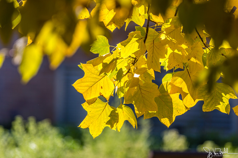 41/52-2: Fall Colors