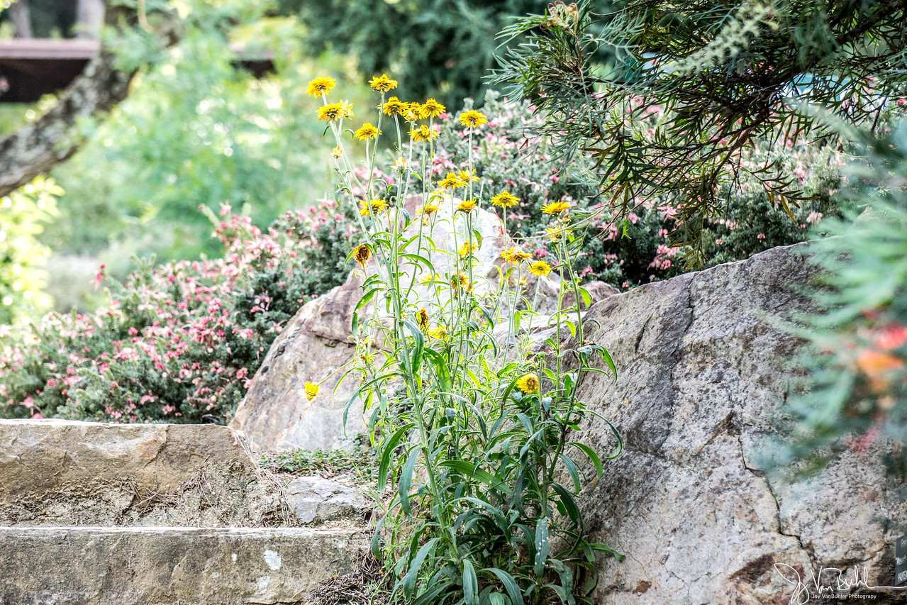 19/52-5: Botanical Garden