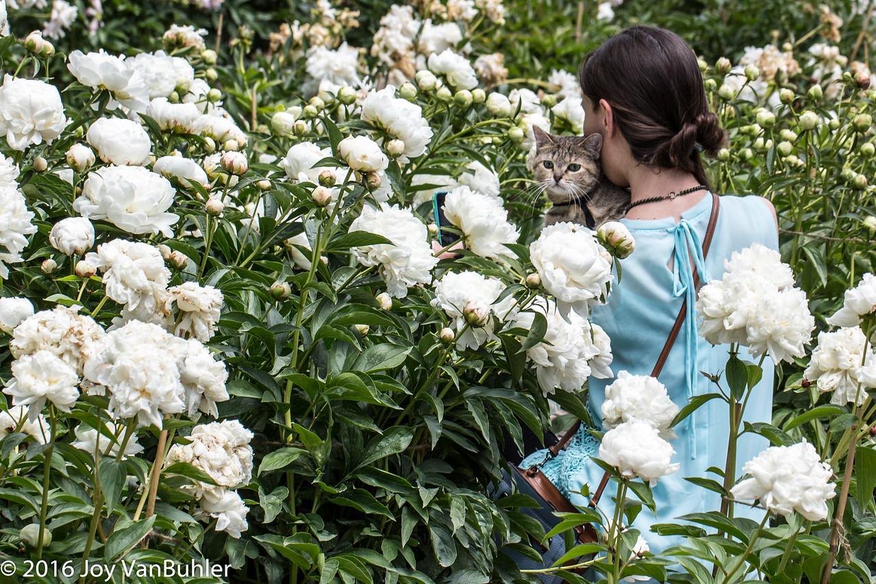 24/52-3: Peony Garden at Nichols Arboretum