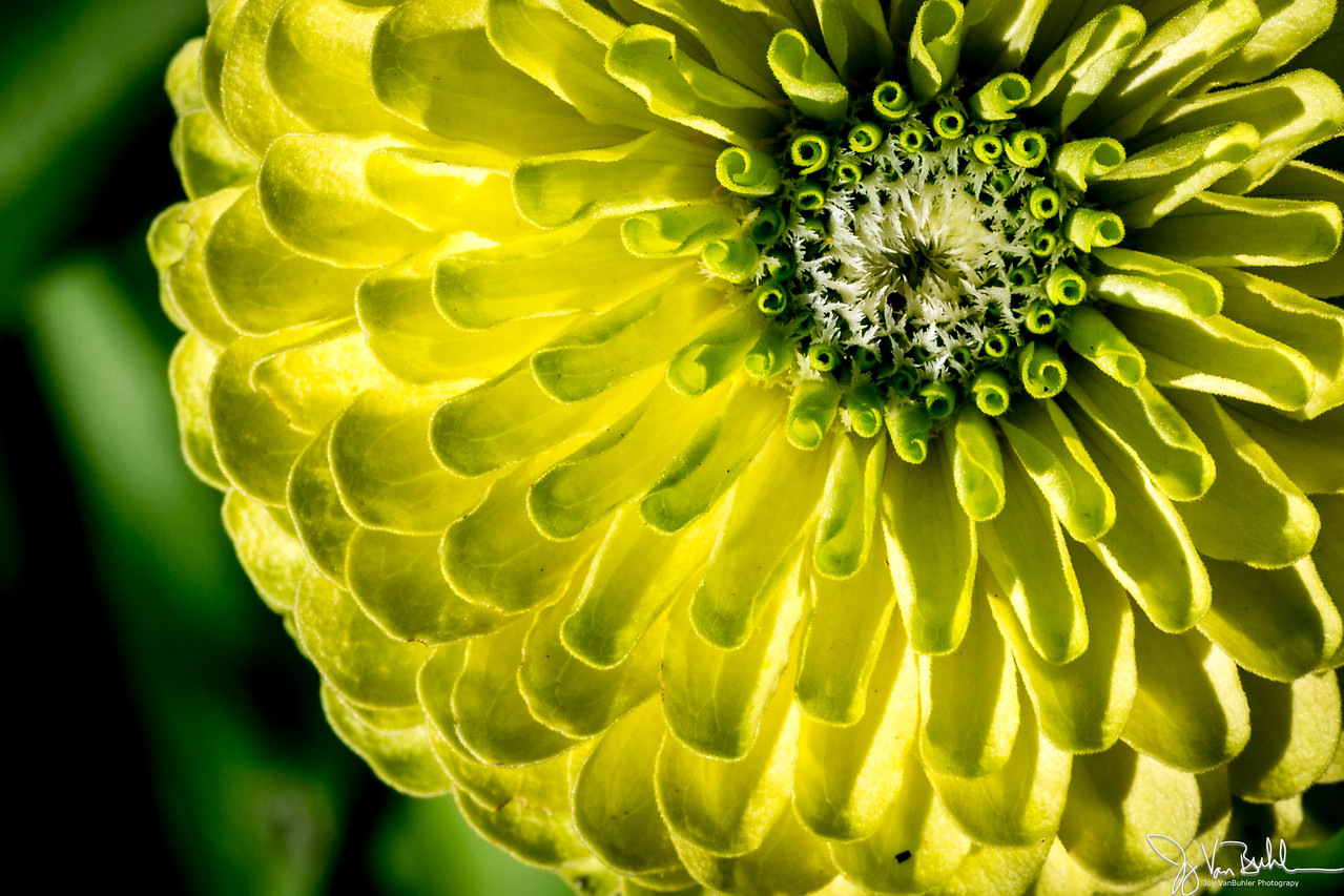 38/52-5: Flower