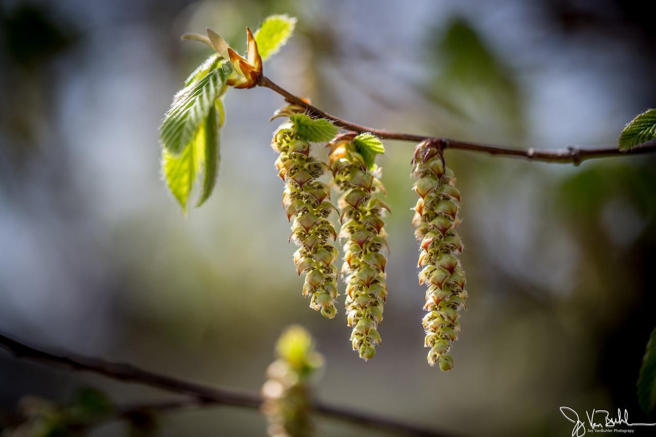 17/52-3: Spring