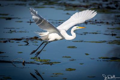 16/52-4: Egret