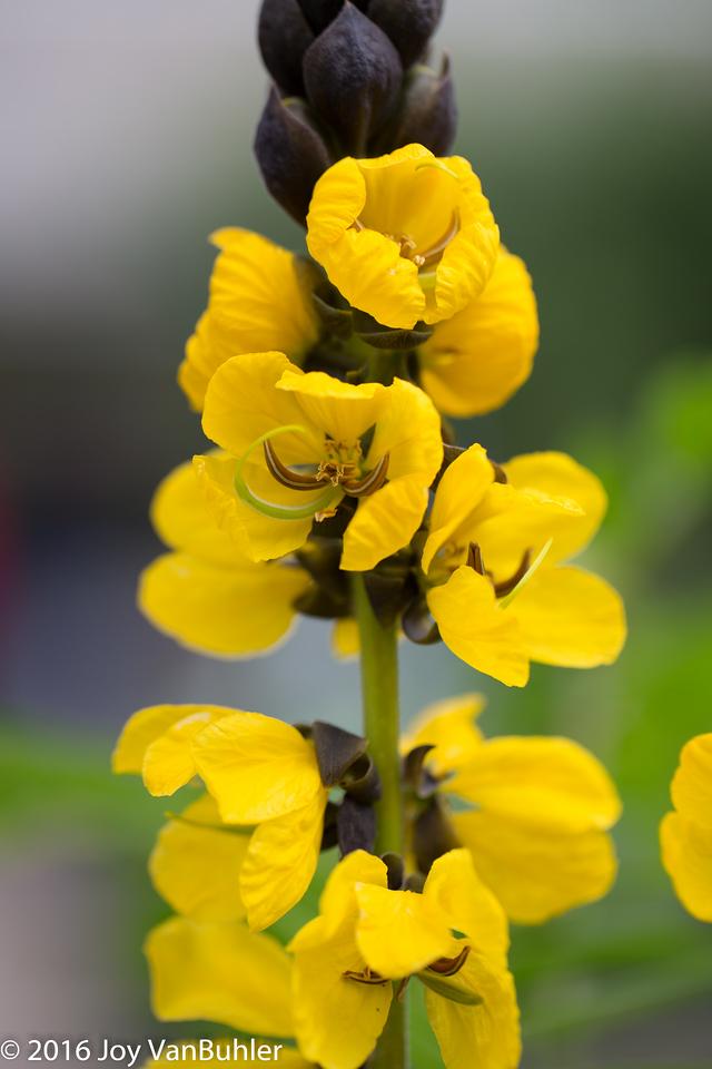 13/52-1: Flowers