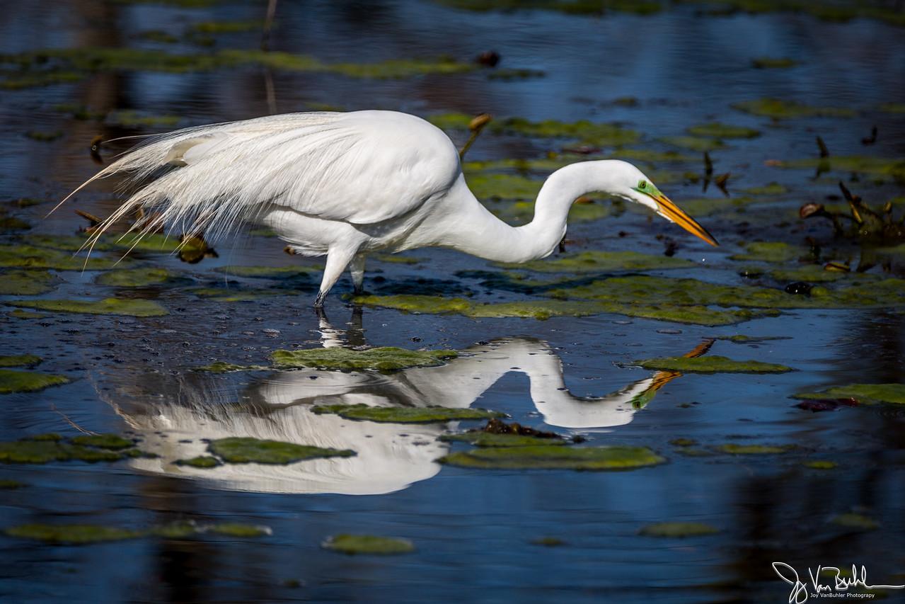 16/52-5: Egret