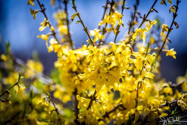 17/52-2: Spring