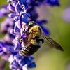 39/52-4: Bee