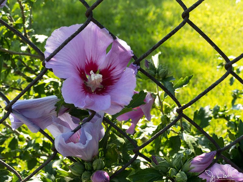 30/52-1: Flower