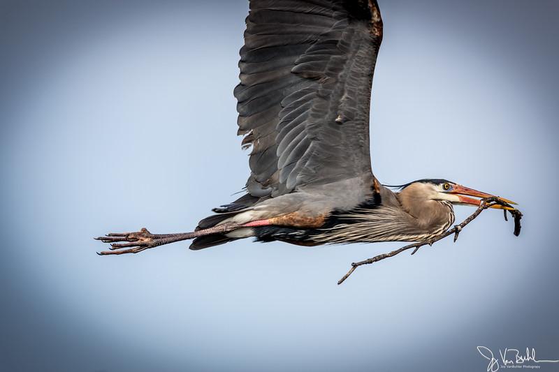 15/52-1: Heron