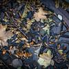 46/52-4: Fallen Leaves