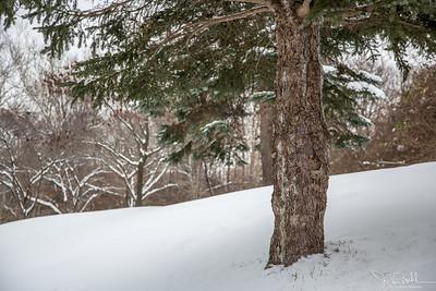 50/52-1: Snowy Day