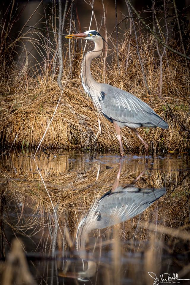 14/52-1: Heron