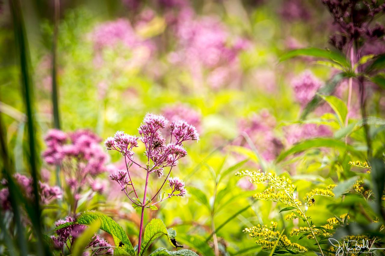 35/52-5: Flowers