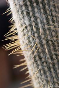 5/52-2: Cactus