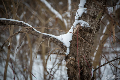 50/52-3: Snowy Day