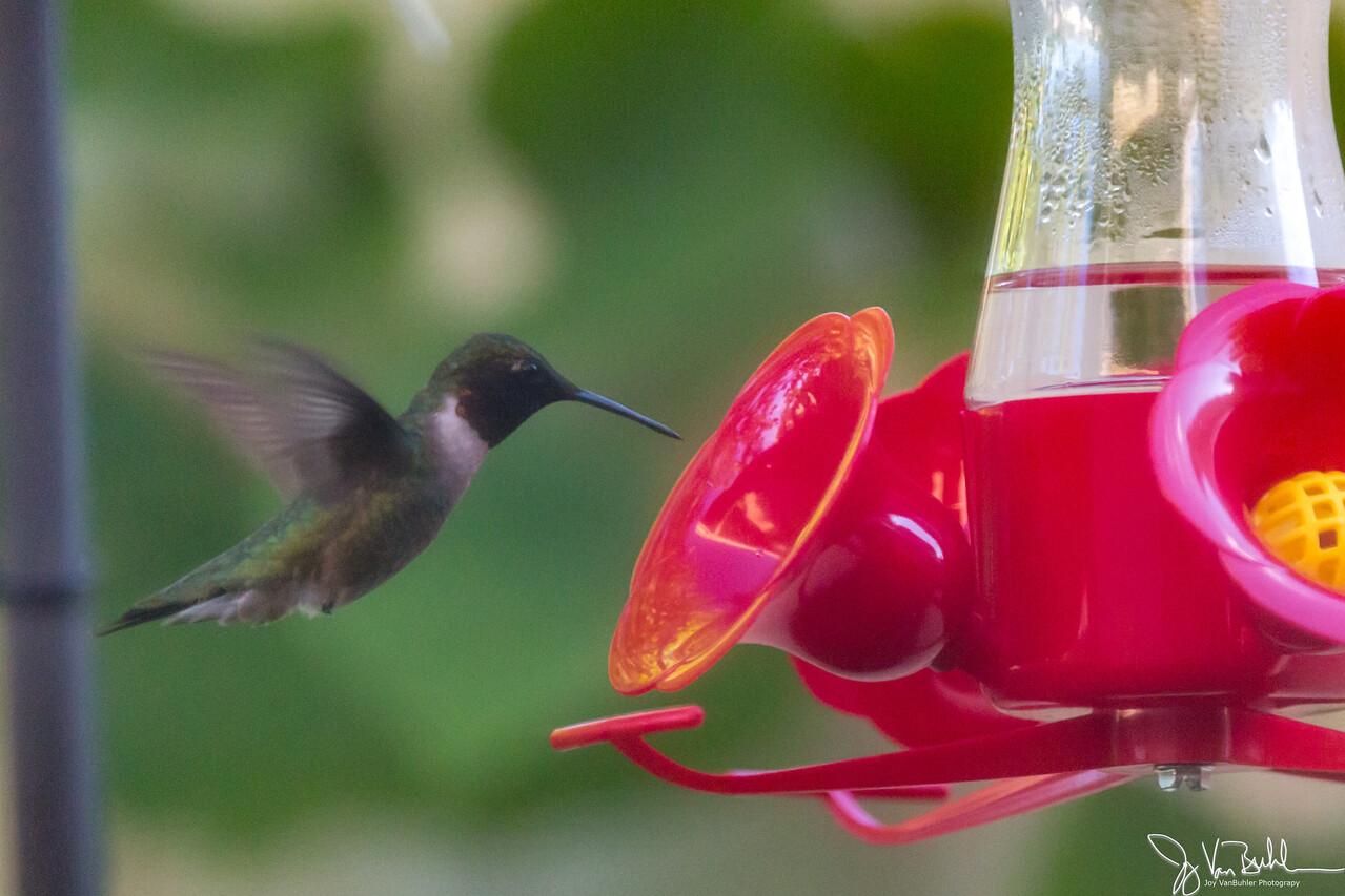25/52-5: Hummingbird