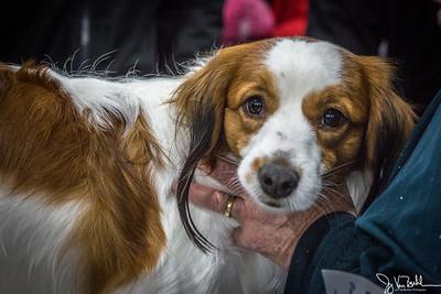 3/52-1: 2018 Winter Dog Show