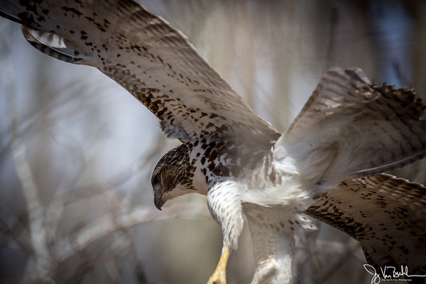 14/52-3: Birds at Kensington