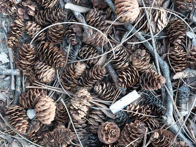 16/52-3: Pine Cones