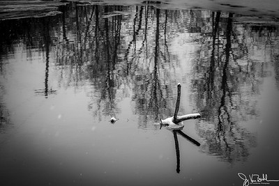 5/52-5: Winter Reflections