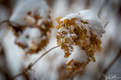 6/52-2: February Snow