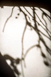 12/52-2: Shadows
