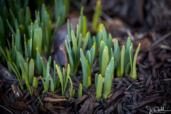 10/52-1: Signs of Spring