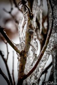 6/52-5: February Snow