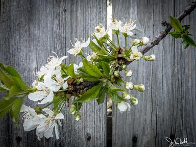 18/52-1: Spring