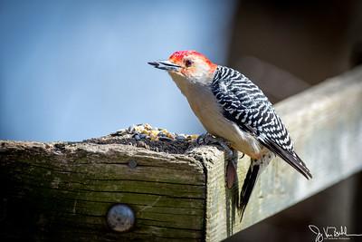 14/52-1: Birds at Kensington