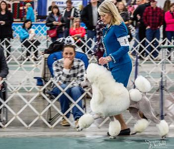 3/52-4: 2018 Winter Dog Show