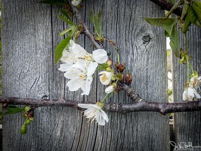 18/52-2: Spring