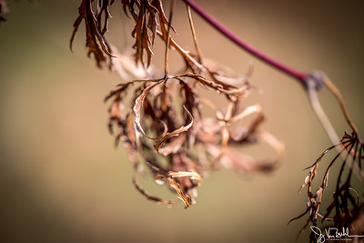 10/52-4: Old Leaves