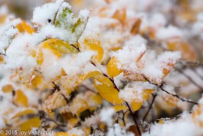 47/52-2: First Snow