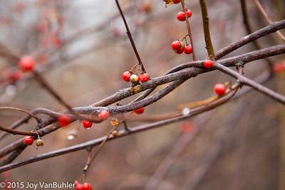 50/52-3: Berries