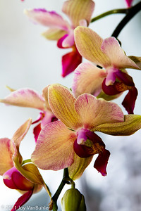 2/6/11 - Pictures of some of my Mom's orchids