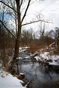 1/28/11 - I was happy to finally get outside to take a picture.  Taken at Matthaei Botanical Gardens