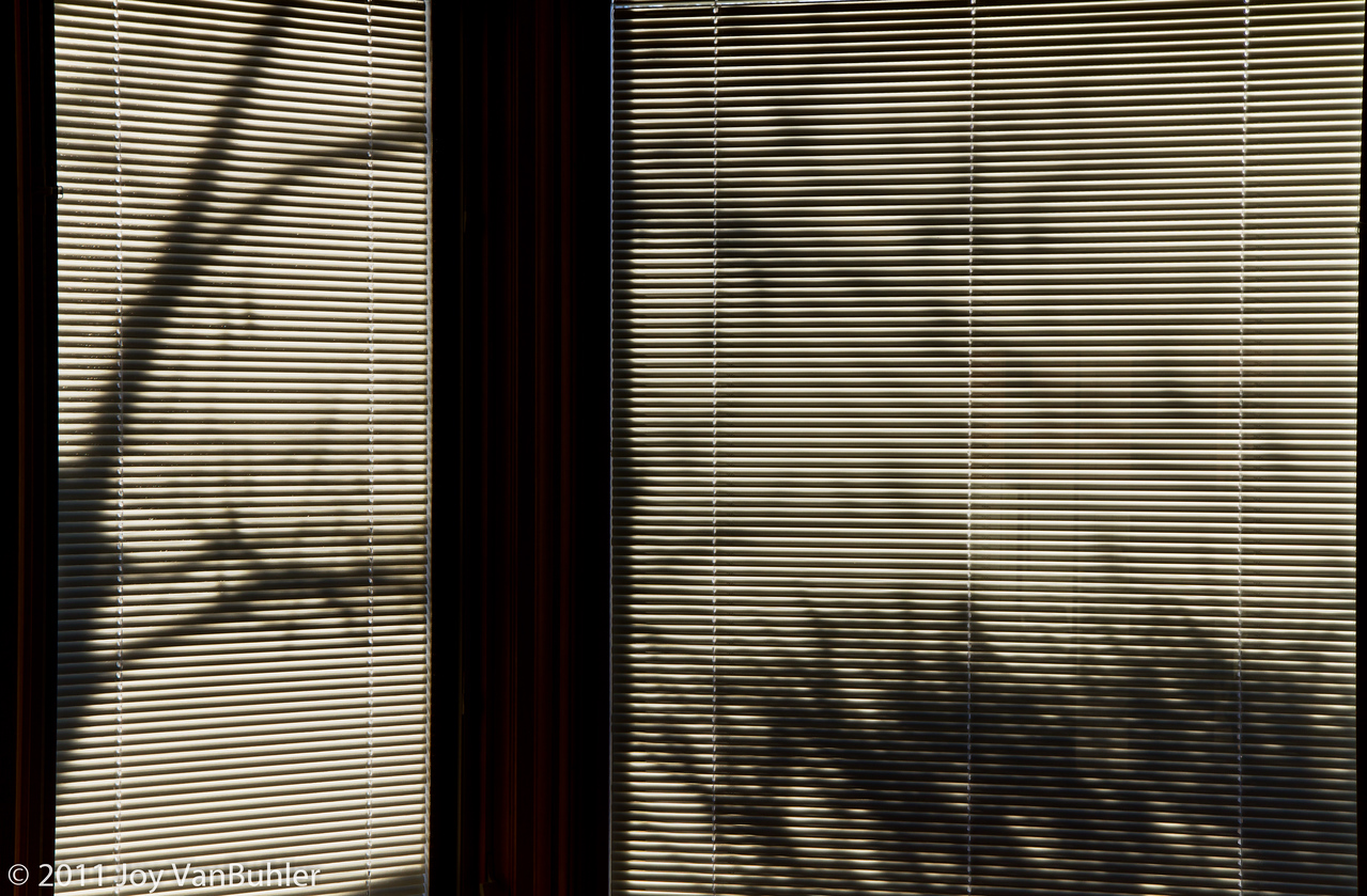 2/4/11 - Closed my blinds so that the sun would not blind me and I loved the shadows that came through.  Created an HDR from three shots to maximize the contrast
