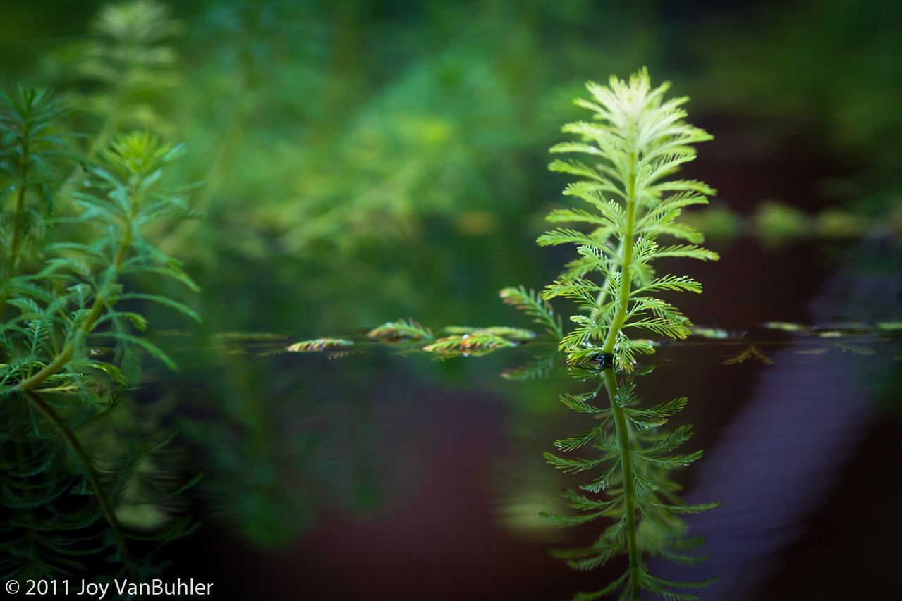 2/20/11 - Taken in the water garden in the Matthaei Botanical Gardens  Conservatory