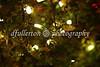 Christmas lights amongst bushes, 2008.