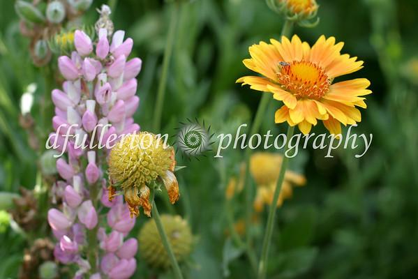 Beautiful flowers grown in Rita's garden.  Taken during the summer of 2007.