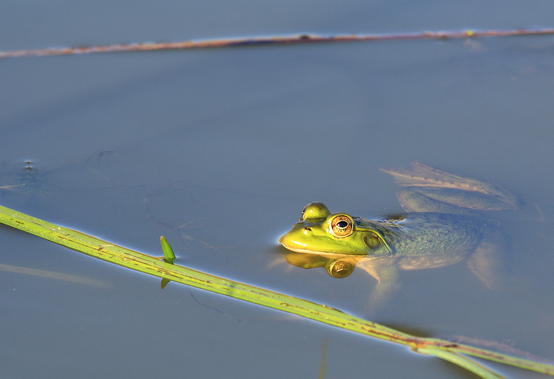 ~ Eyes of the Pond ~