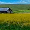 ~ Small Family Farm ~