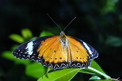 Butterfly Conservatory 09
