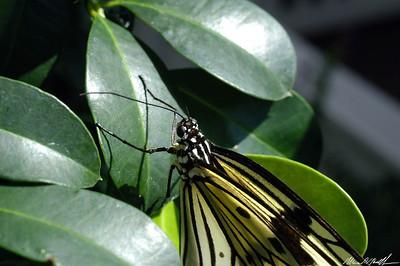 Butterfly Conservatory 10
