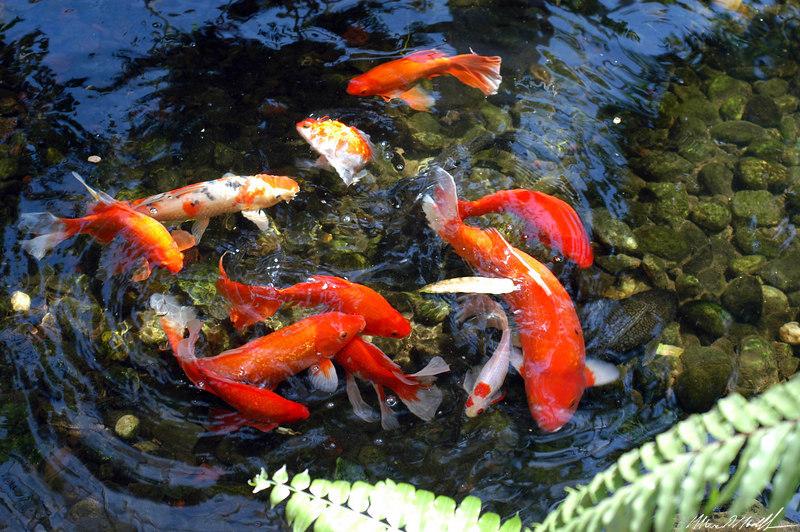 Butterfly Conservatory 18 carp