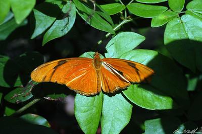Butterfly Conservatory 23