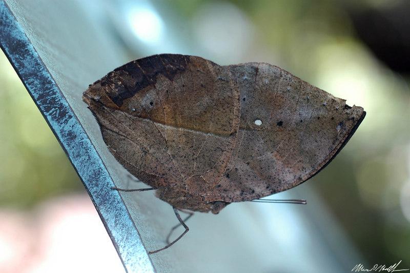 Butterfly Conservatory 02