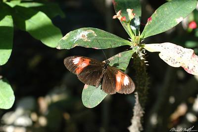 Butterfly Conservatory 24